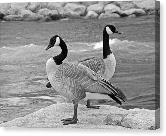 Two Geese In Black And White Canvas Print