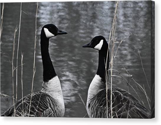 Two Goose Tango Canvas Print