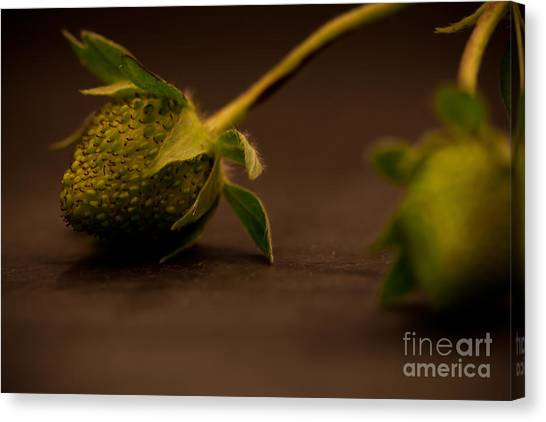 Two Green Strawberries Canvas Print by Patricia Bainter