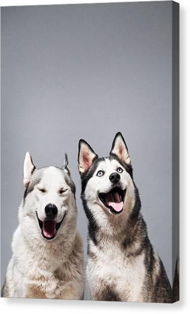 Two Happy Husky Dogs Canvas Print by Ilka & Franz