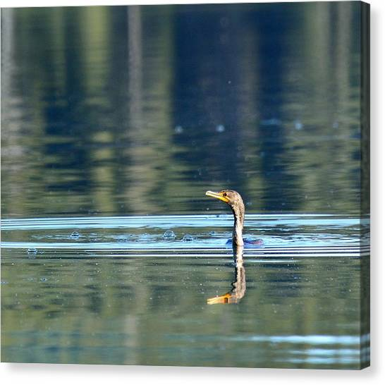 Two Headed Cormorant Canvas Print by Rich Rauenzahn