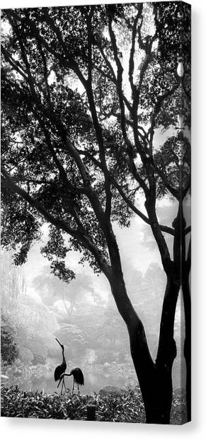 Two Heron - Black And White Canvas Print
