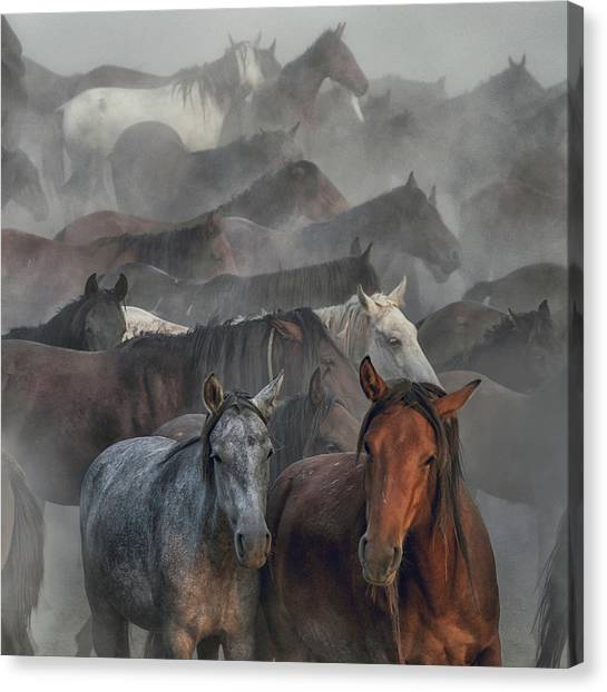 Dust Canvas Print - Two Horses by H??seyin Ta??k??n