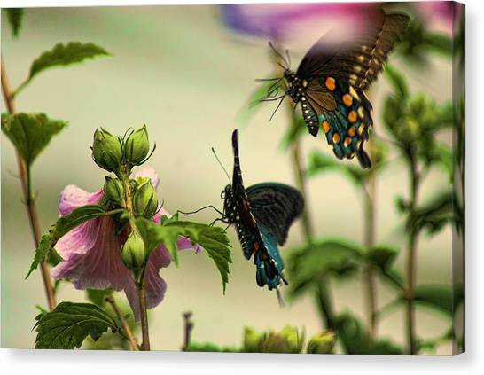 Two In Flight Canvas Print