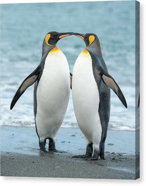 Two King Penguins On A Beach In South Canvas Print by Elmvilla