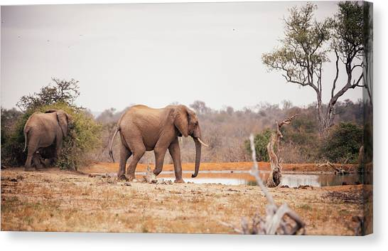 Two Large Elephants Approaching A Canvas Print by Wundervisuals