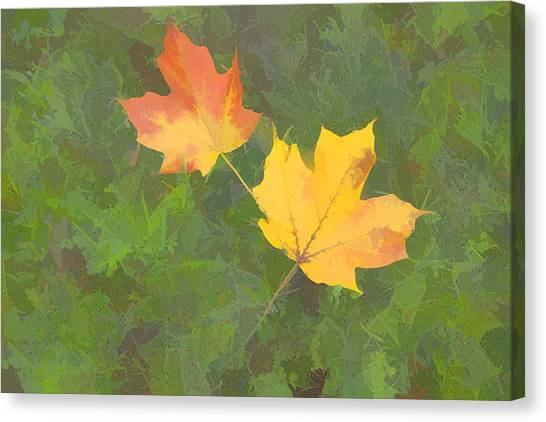 Two Leafs In Autumn Canvas Print by Indiana Zuckerman