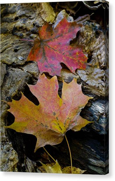 Two Leaves Canvas Print