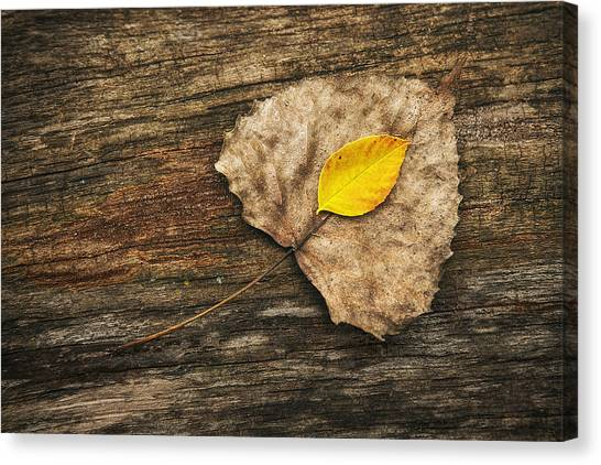 Fallen Tree Canvas Print - Two Leaves  by Scott Norris