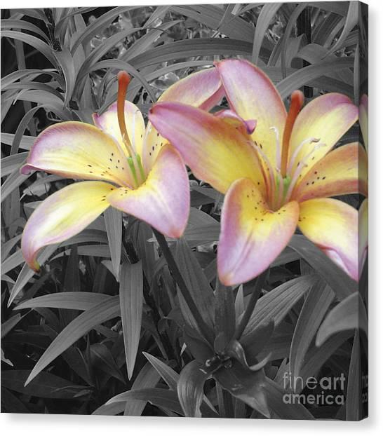 Two Lilies Canvas Print by Stephen Prestek