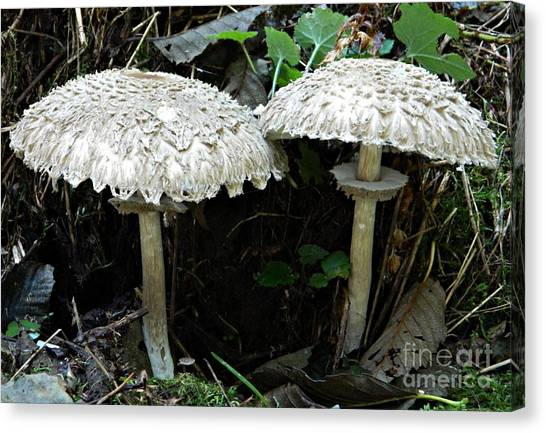Two Magnificent Toadstools Canvas Print