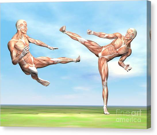 Jujitsu Canvas Print - Two Male Musculatures Fighting Martial by Elena Duvernay