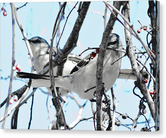 Two Mocking Birds Canvas Print