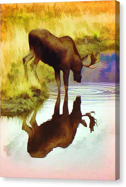 Two Moose  Canvas Print