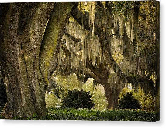Two Oaks Canvas Print