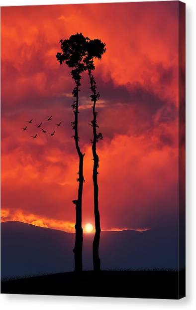 Two Oaks Together In The Field At Sunset Canvas Print