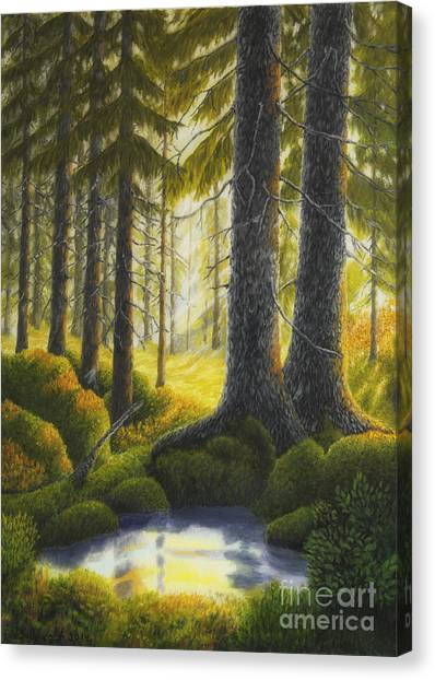 Mossy Forest Canvas Print - Two Old Spruce by Veikko Suikkanen