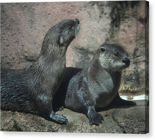 Two Otters Canvas Print