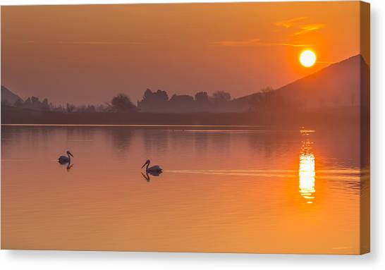 Two Pelicans At Sunrise Canvas Print