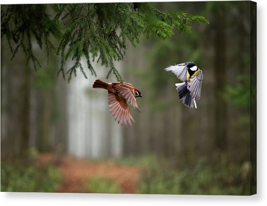Fighting Canvas Print - Two by P?ter Bogn?r
