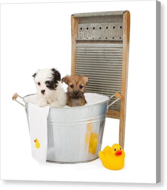 Two Puppies Taking A Bath Canvas Print