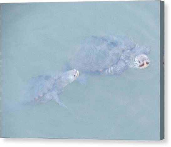 Two Rare Turtles Swam Up To See Canvas Print by Debbie Nester