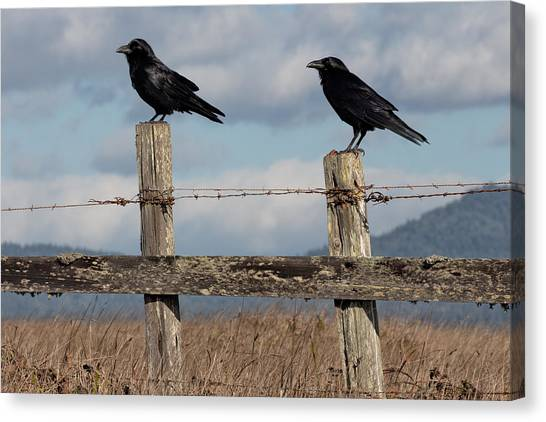 Bishop Hill Canvas Print - Two Ravens On A Fence by Kathleen Bishop