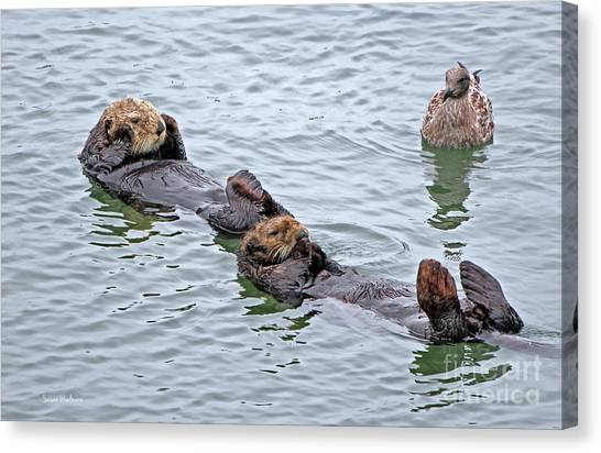 Two Sea Otters And A Gull Canvas Print