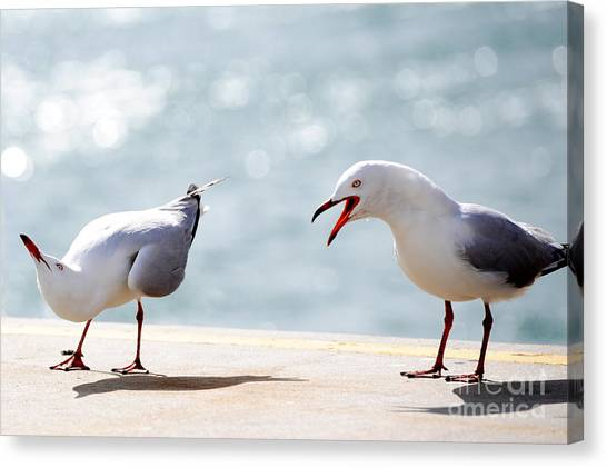 Canvas Print featuring the photograph Two Seagulls by Yew Kwang