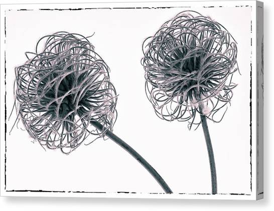 Two Seeds Canvas Print