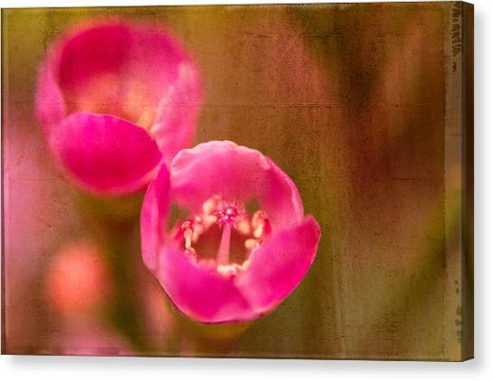 Two Tiny Pink Flowers Canvas Print
