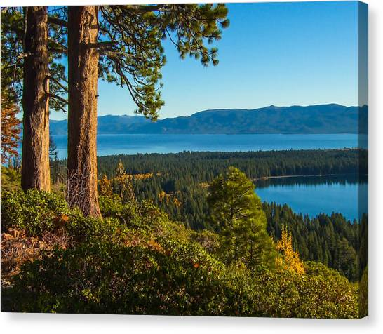 Two Trees Above Two Lakes Canvas Print