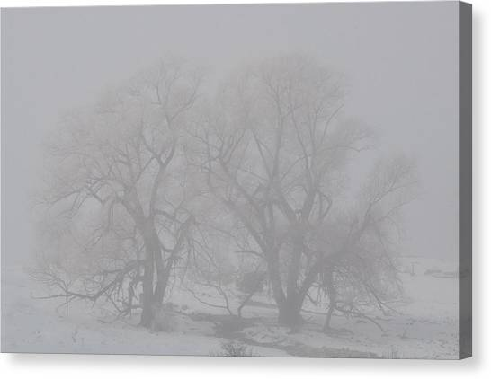Two Trees Canvas Print by BandC  Photography