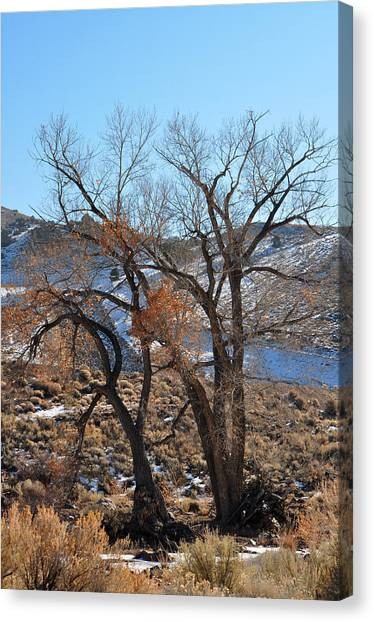 Two Trees In The Mountains Canvas Print