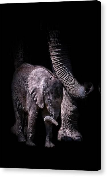Two Trunks Canvas Print