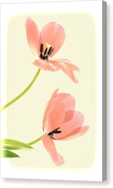 Two Tulips In Pink Transparency Canvas Print