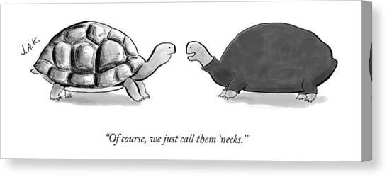 Turtles Canvas Print - Two Turtles by Jason Adam Katzenstein