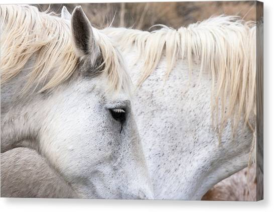 Two White Horses Canvas Print
