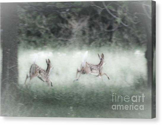 Two Whitetail Fawns Running Canvas Print