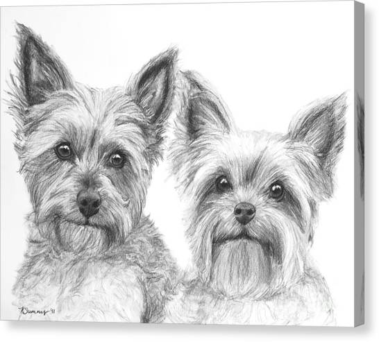 Two Yorkshire Terriers In Charcoal Canvas Print