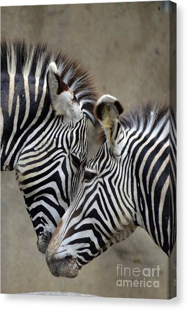 Zebras Canvas Print - Two Zebras by Mark Newman