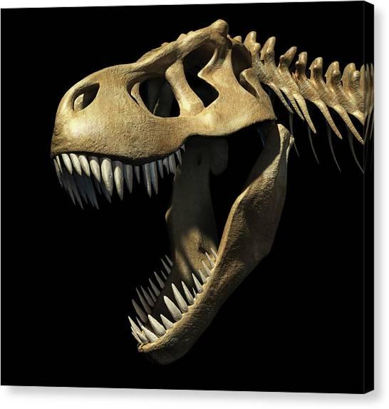 T-bone Canvas Print - Tyrannosaurus Rex Skull by Leonello Calvetti