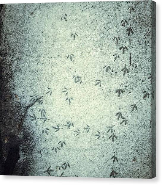Dove Canvas Print - Uccellacci E Uccellini by Levshinamarlen LEVSHINA