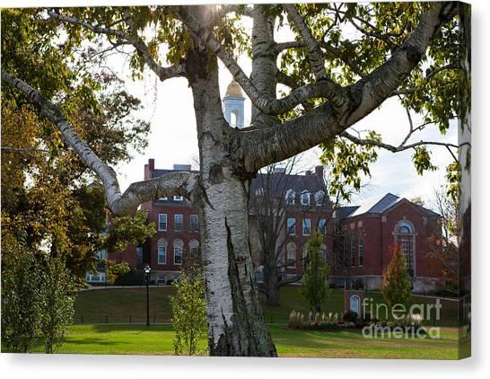 University Of Connecticut Canvas Print - Wilbur Cross Through Tree by Steve Pfaffle