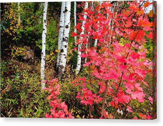 Uinta Canvas Print - Uinta Colors by Chad Dutson