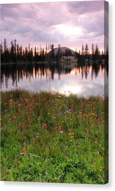 Uinta Canvas Print - Uinta Wildflowers by Johnny Adolphson