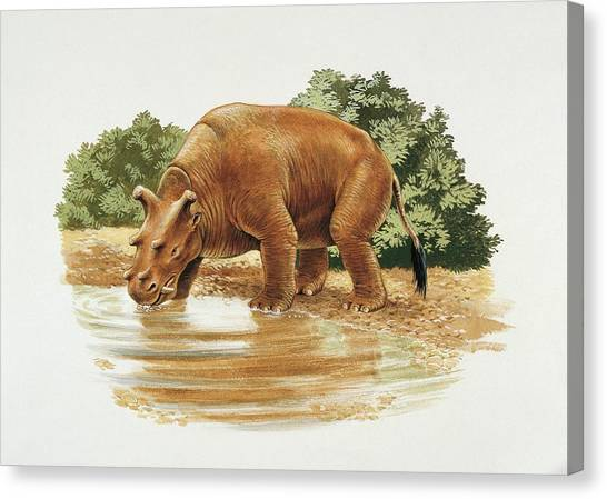 Uintatherium Canvas Print by Deagostini/uig/science Photo Library