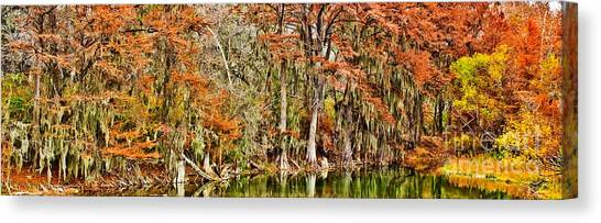 Ultimate Cypress Panoramic Canvas Print