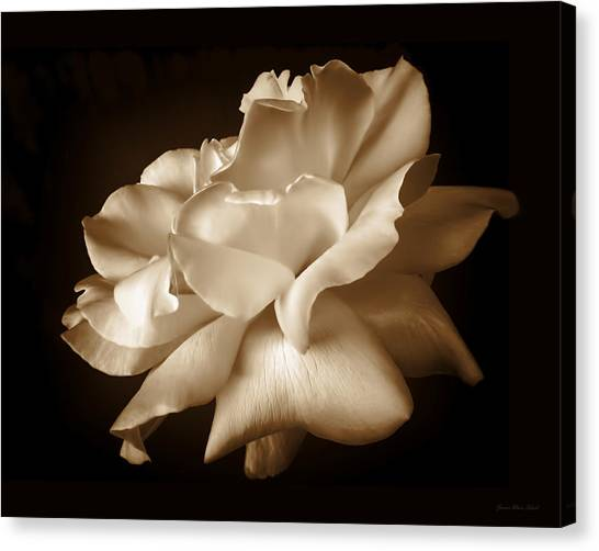 Monochromatic Canvas Print - Umber Rose Floral Petals by Jennie Marie Schell