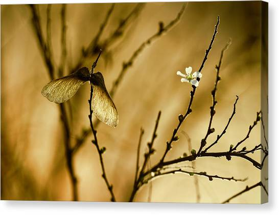Yellow Butterfly Canvas Print - Un Altra Storia by Fabien Bravin